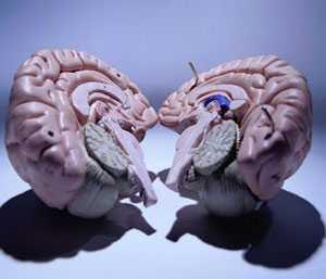 Beynin Sol Tarafı