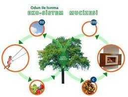 Ekosistem nedir ?